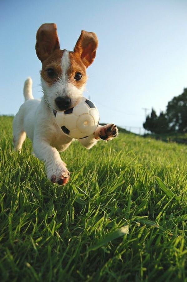 zufriedener-hund-spielzeug-hund-spielzeug-für-hunde-coole-idee-für-den-hund