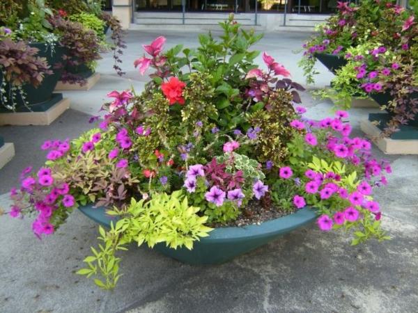 Ideen-für-Blumenkübel-lila-grün-duftend-frisch-garten