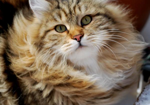 Katze-bei-windigem-Wetter