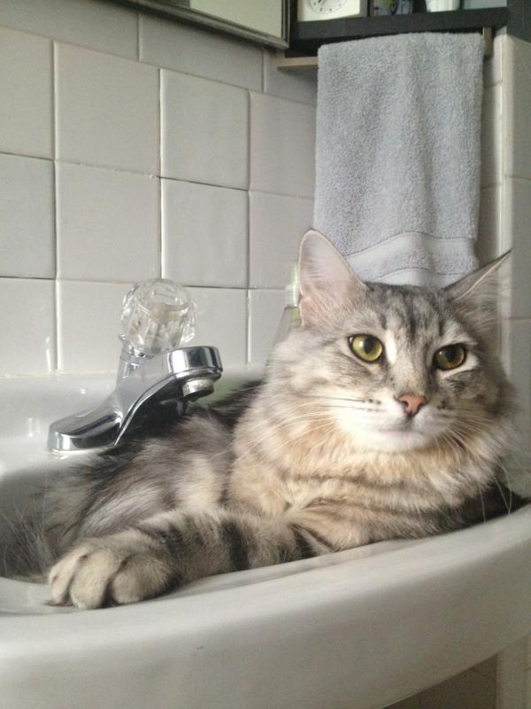 Katze-im-Spülbecken
