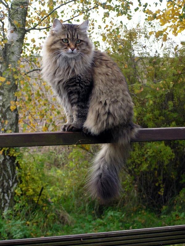 Katze-im-Sommerfell