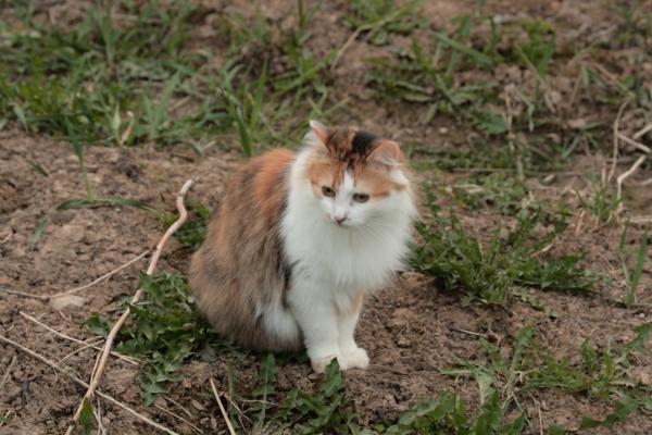 Katze-mit-Tiger-Fell