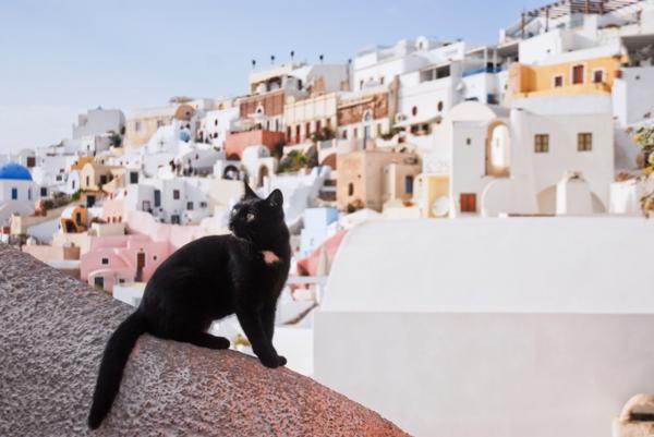 Katzen-sind-überall