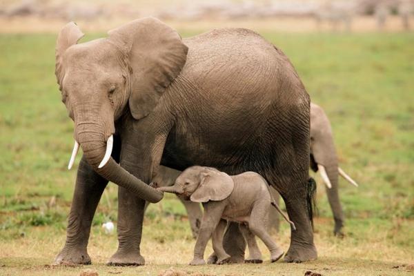 25 s e bilder vom baby elefant. Black Bedroom Furniture Sets. Home Design Ideas