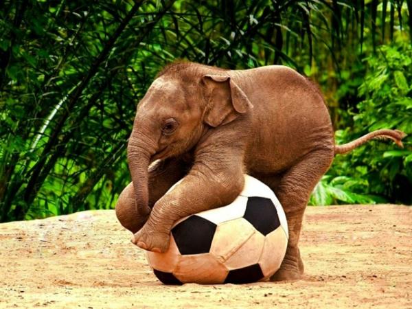 baby-elefant-spielt-fußball-und-hat-spaß