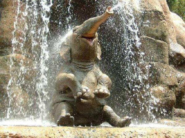 baby-elefant-unter-einem-wasserfall-hat-viel-spaß