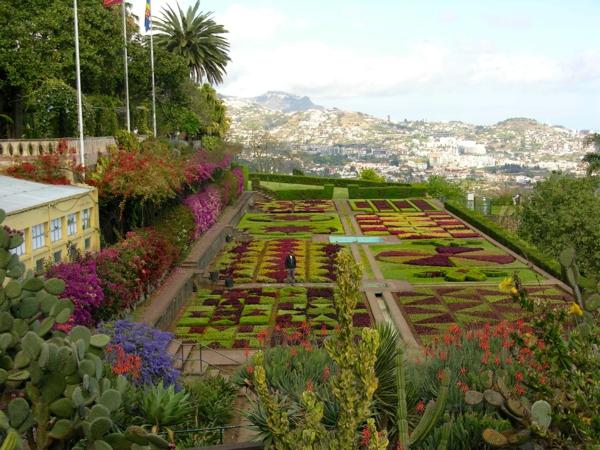 Carpet of flowers, Madiera #1