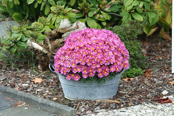blumendeko-ideen-für-einen-schönen-pflanzkübel-