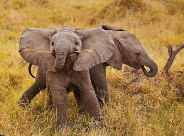 cooles-natürliches-foto-vom-baby-elefant