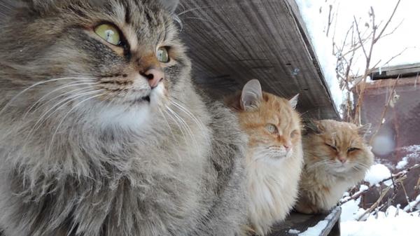 drei-wilde-Katzen