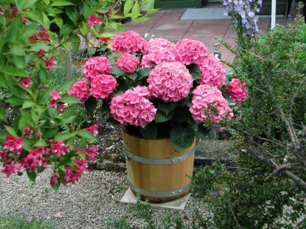 Blumenkübel ein-pflanzkübel-mit-schönem-design-aus-holz-gartengestaltung-ideen-gartengestaltung-beispiele-gartengestaltungsideen