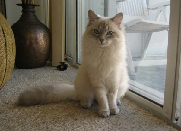 flaumige-Katze