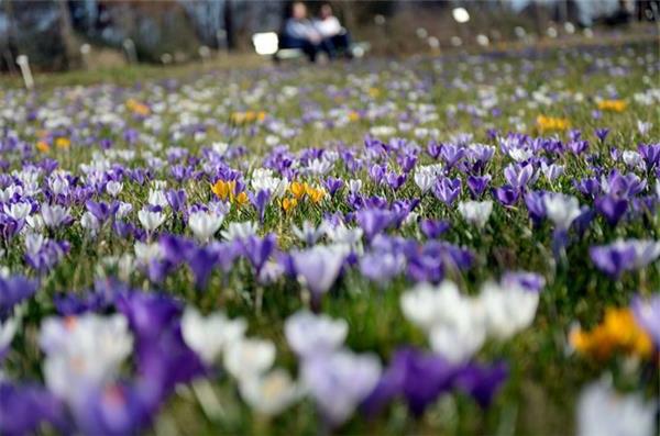 frühling-in-berlin-wiesen-mit-wunderschönen-blumen