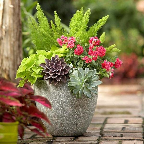 gartenideen-herbst-garten-topfpflanzen-zimmerpflanzen