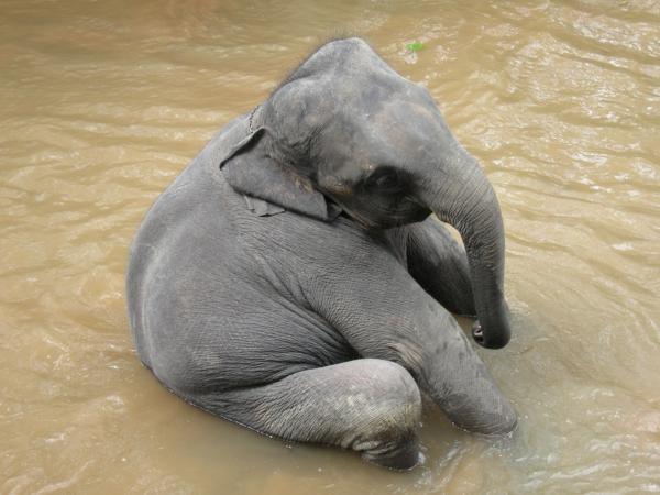 süßes foto von einem baby elefant im wasser
