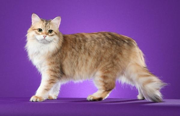 hübsche-Katze