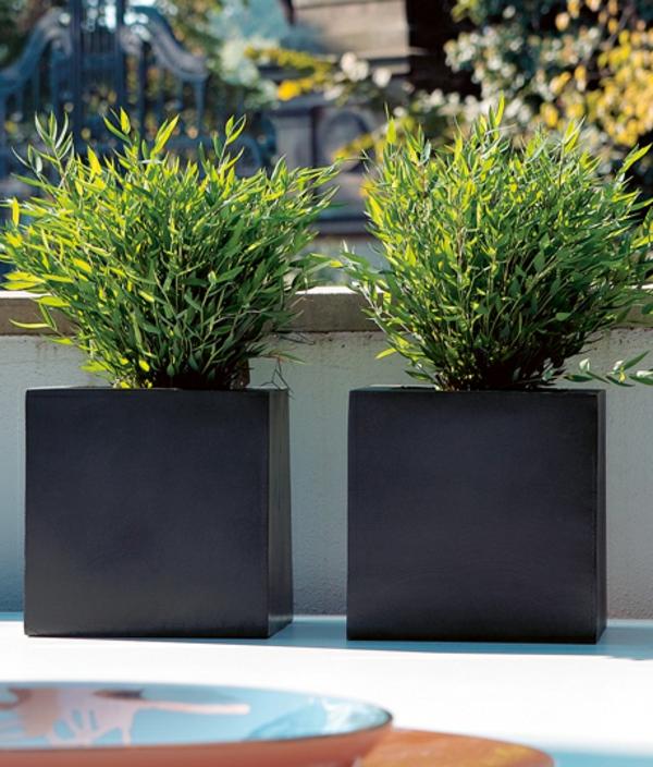 kubische-pflanzkueleb-in-schwarzer-farbe-ideen-für-einen-schönen-blumenkübel-