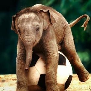 25 süße Bilder vom Baby Elefant!