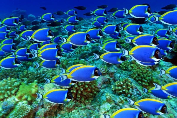 malediven-urlaub-malediven-malediven-reisen-malediven-urlaub-malediven-reisen-tauchen