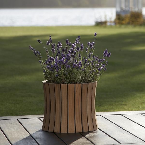 garten pflanzen. Black Bedroom Furniture Sets. Home Design Ideas