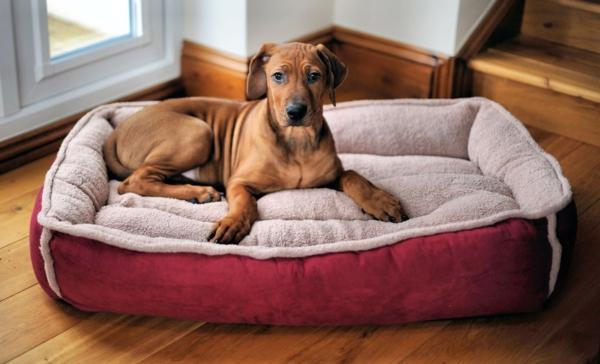 rotes-hundekissen -hundebett-design-sofa-für-ihren-hund-schöne-hundeaccessoires--