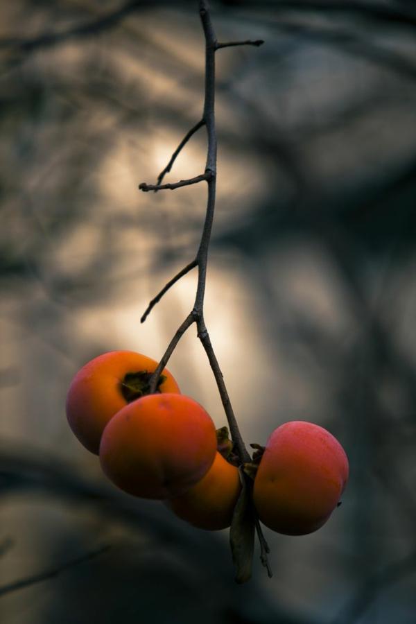 süße-Persimmons