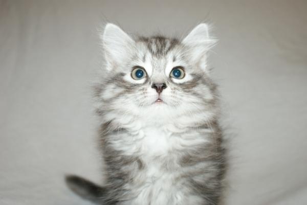süßes-Kätzchen