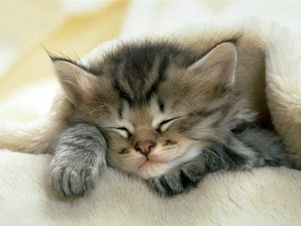 schlafendes-Kätzchen