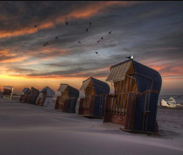 strandkrob-single-design-wunderschönes-foto-sehr-inspirierend - interessantes foto