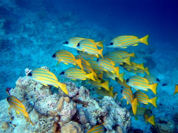 tauchen-auf-den-malediven-urlaub-malediven-malediven-reisen-malediven-urlaub-malediven-reisen