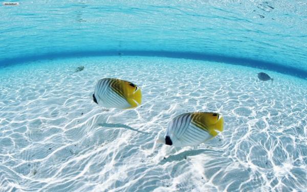 tauchen-malediven-urlaub-malediven-malediven-reisen-malediven-urlaub-malediven-reisen