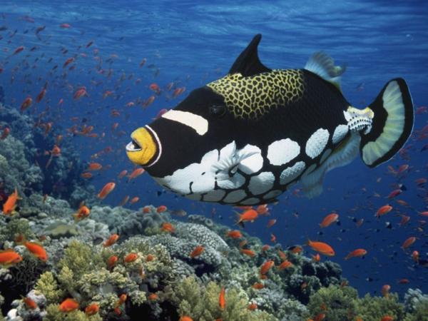 tauchen--malediven-urlaub-malediven-malediven-reisen-malediven-urlaub-malediven-reisen
