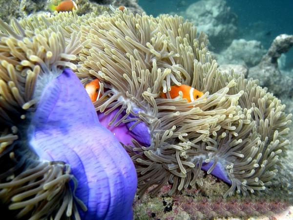 -tauchen-malediven-urlaub-malediven-malediven-reisen-malediven-urlaub-malediven-reisen