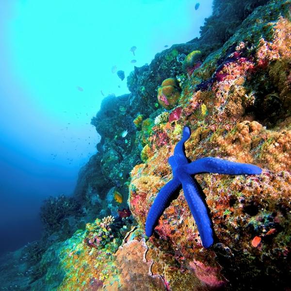 unter-dem-wasser-malediven-urlaub-malediven-malediven-reisen-malediven-urlaub-Urlaub auf den Malediven malediven-reisen