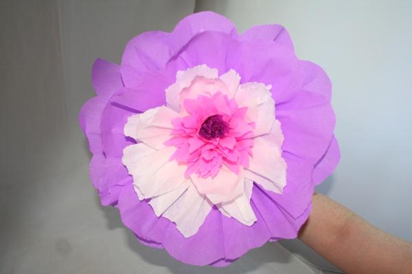 vielschichtige-Papierblume-resized