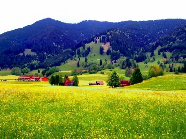 wunderschönes-bild-herrliche-natur-grüne-wiesen-dorf