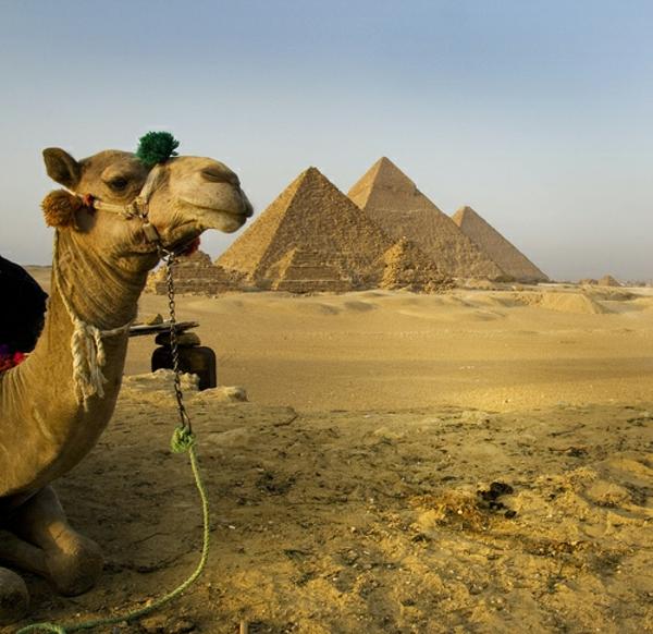 Ägypten-Reise-bild-von-einem-kamel - viel Sand