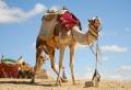 Haben Sie Lust auf eine unglaubliche Ägypten Reise?