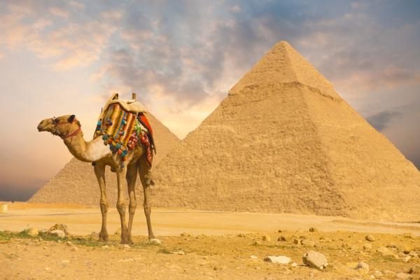 Ägypten-Reise-kamel-pyramide - goldene farbe