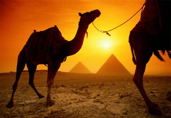 Ägypten-Reise-kamel-und-pyramiden