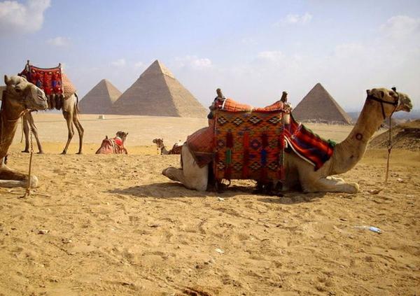 Ägypten-Reise-liegendes-kamel - auf dem sand