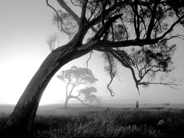 Baum-Morgen-nebelig