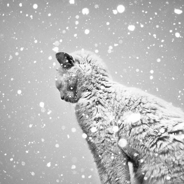 schwarz-weiß-Fotografie-Katze-Schneeflocken