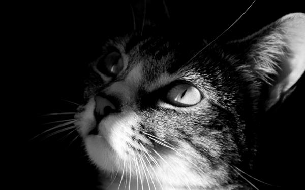 Katze-graue-Augen