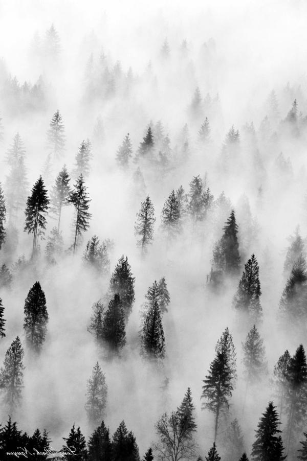 schwarz-weiß-Fotografie-Nebel-Bäume