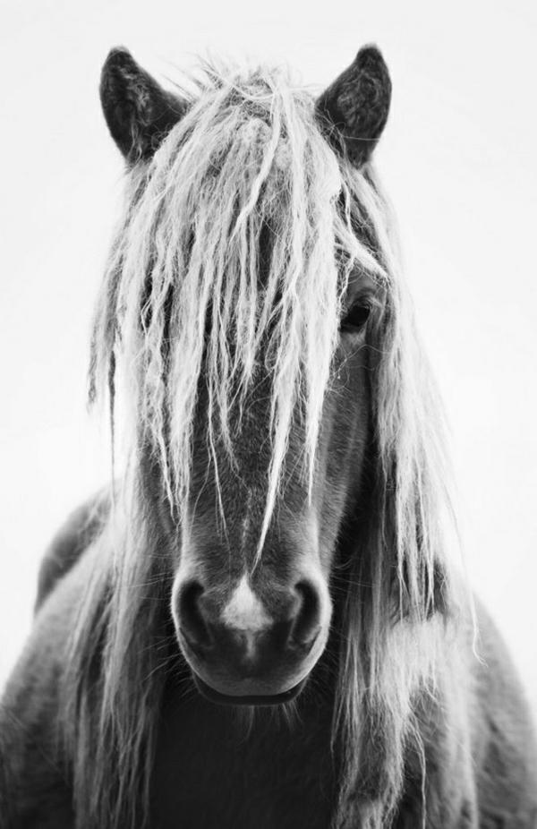 Pferd-blond