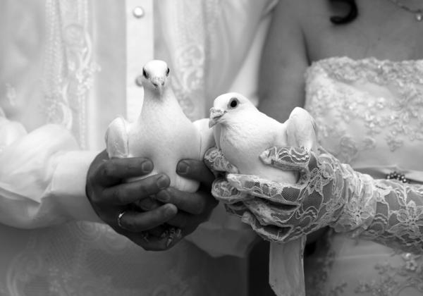 Tauben-Brautpaar-Tradition