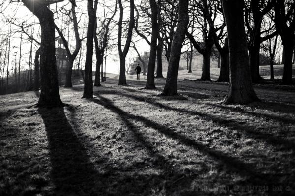 Wald-Schatten-Mann