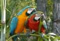 Ara Papagei – unikale Fotografien der bunten Vögel