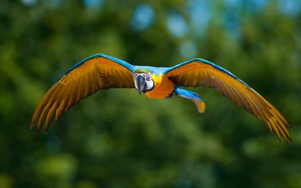 Ara Papagei unikale Fotografien der bunten V246gel